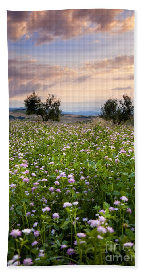 Field Bath Sheet featuring the photograph Tuscany by Brian Jannsen