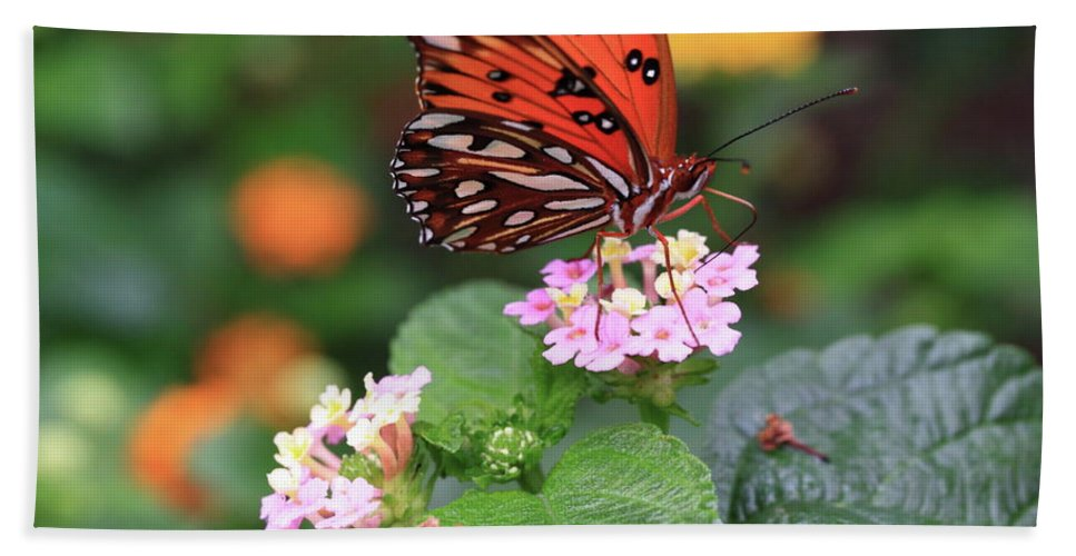 Butterfly Hand Towel featuring the photograph Untitled by Rick Berk