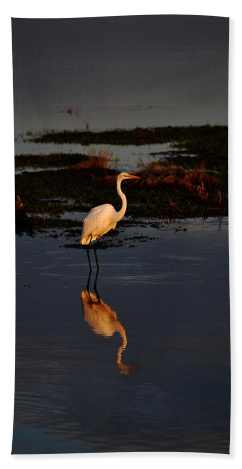 Egret Bath Sheet featuring the photograph Waiting by Lori Tambakis