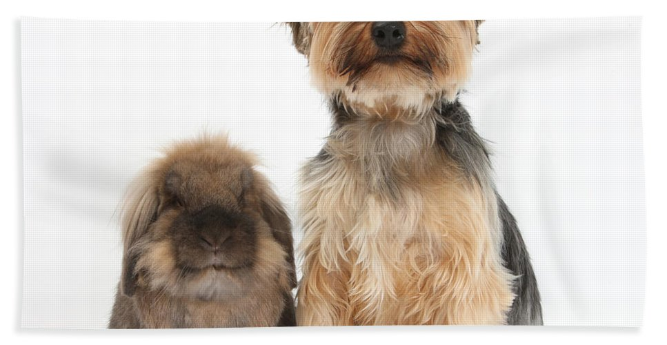 Nature Hand Towel featuring the photograph Yorkshire Terrier Dog by Mark Taylor