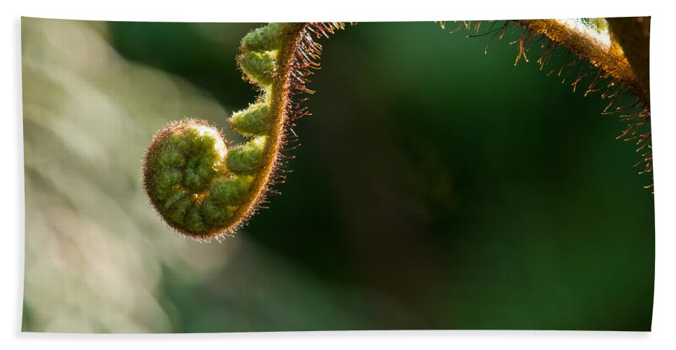Beginnings Bath Sheet featuring the photograph Young Fern In The Morning Sun by U Schade