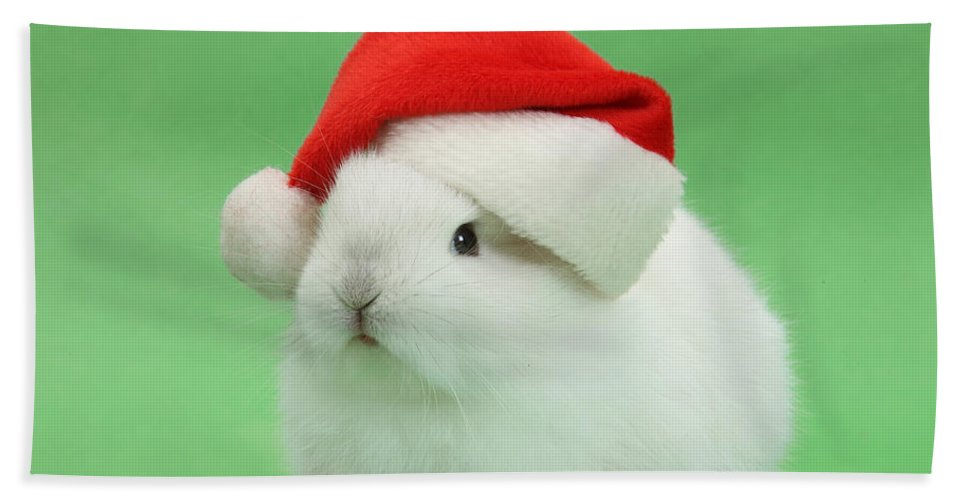Nature Hand Towel featuring the photograph Young White Rabbit Wearing A Christmas by Mark Taylor