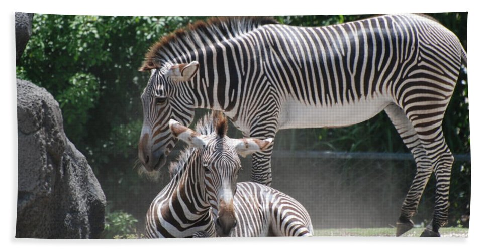 Animal Bath Sheet featuring the photograph Zebras by Rob Hans