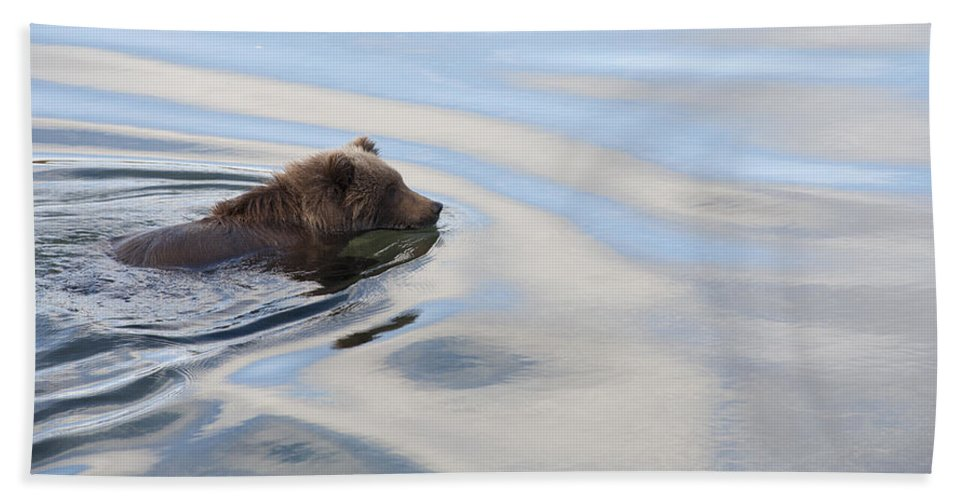 Mp Hand Towel featuring the photograph Grizzly Bear Ursus Arctos Horribilis by Matthias Breiter