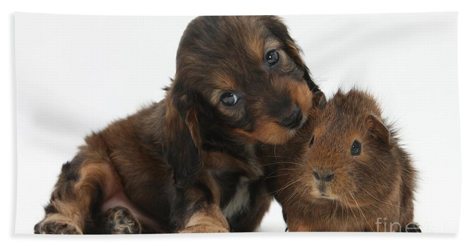 Animal Hand Towel featuring the Puppy And Guinea Pig by Mark Taylor