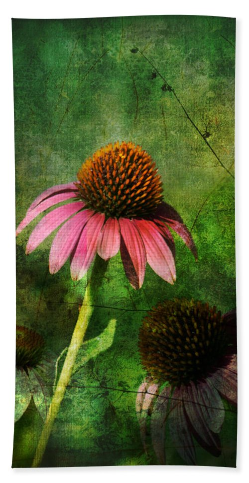 Coneflower Bath Sheet featuring the photograph 3 Amigos Echinacea Coneflower Grunge Art by Kathy Clark