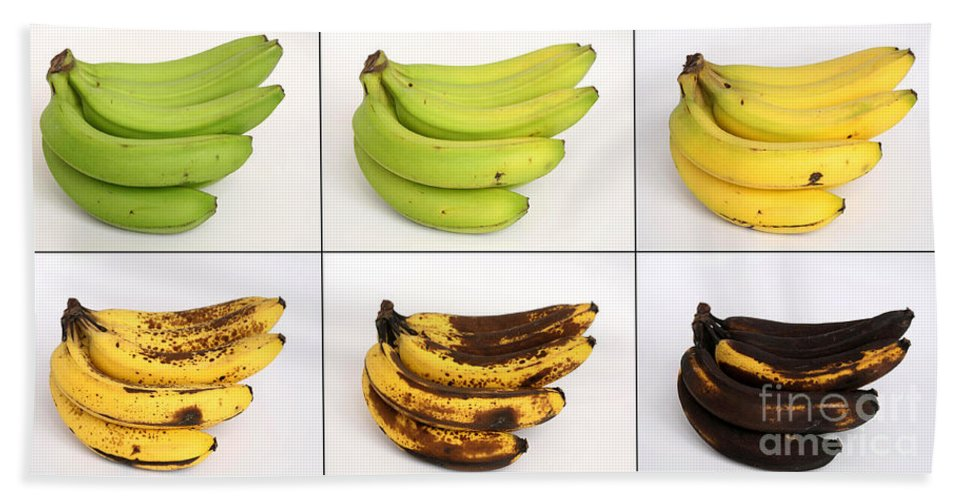 Plant Hand Towel featuring the photograph Banana Ripening Sequence by Ted Kinsman