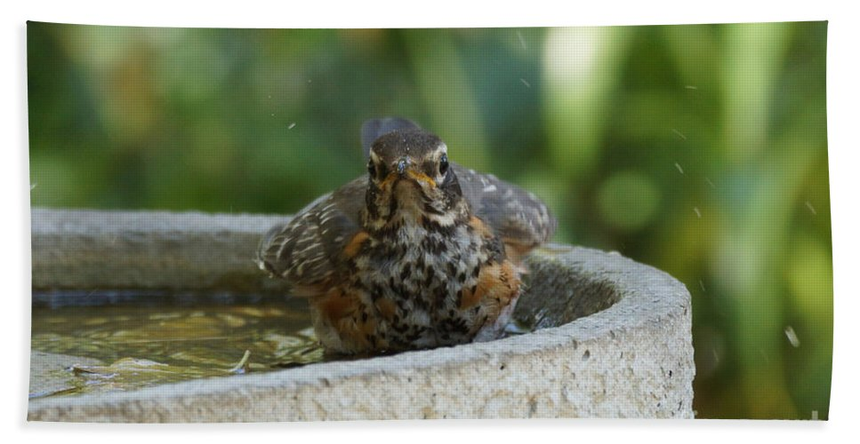Robin Bath Sheet featuring the photograph Bird Bath Fun Time by Lori Tordsen