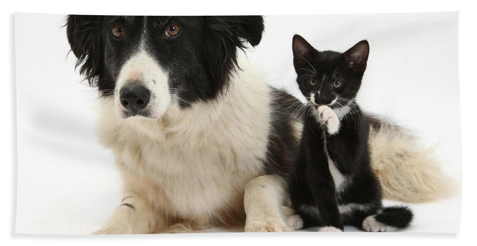 Animal Hand Towel featuring the photograph Border Collie And Tuxedo Kitten by Mark Taylor