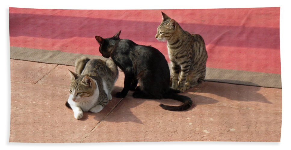 Cats Bath Sheet featuring the photograph 3 Cats Looking Pensive by Ashish Agarwal