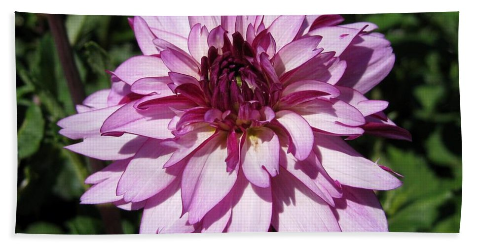 Dahlia Bath Sheet featuring the photograph Dahlia Named Lauren Michelle by J McCombie