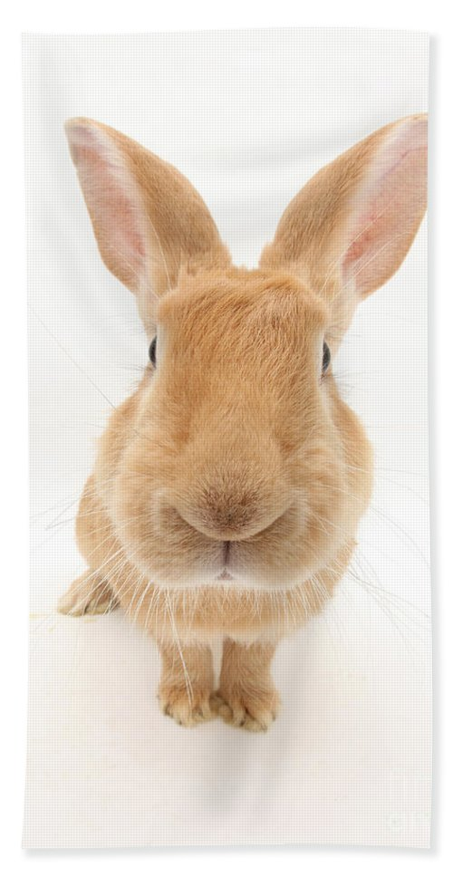 Animal Hand Towel featuring the photograph Flemish Giant Rabbit by Mark Taylor