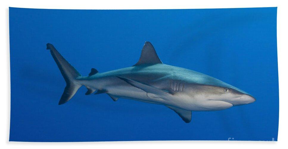 Fish Bath Sheet featuring the photograph Gray Reef Shark, Kimbe Bay, Papua New by Steve Jones