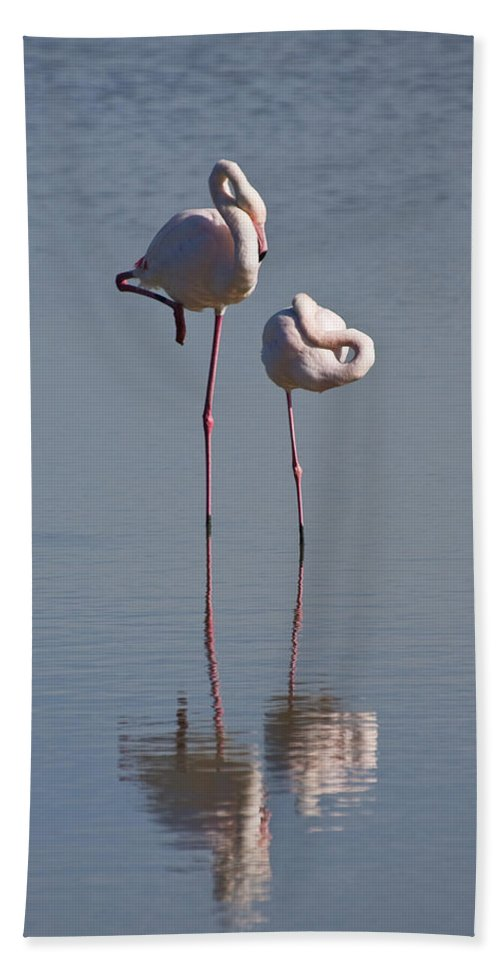 Mp Hand Towel featuring the photograph Greater Flamingo Phoenicopterus Ruber by Konrad Wothe