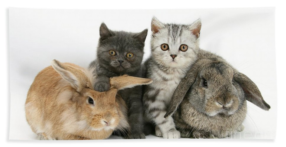 Nature Hand Towel featuring the photograph Kittens And Rabbits by Mark Taylor