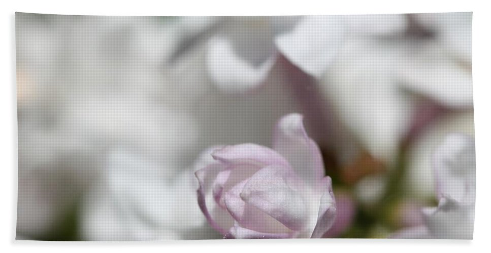 Lilac Bath Sheet featuring the photograph Lilac Named Beauty Of Moscow by J McCombie