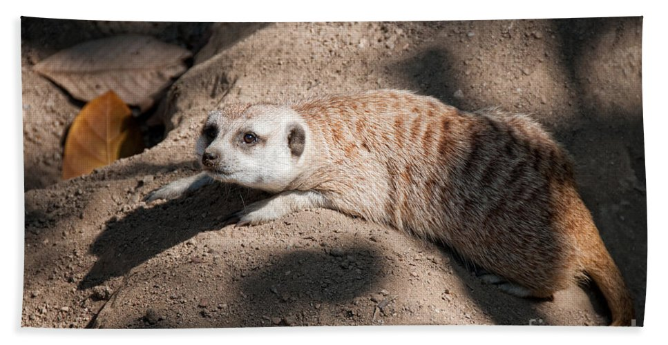 Animals Bath Sheet featuring the digital art Meerkat by Carol Ailles