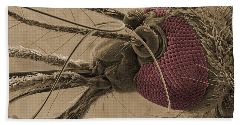 Mosquito Hand Towel featuring the Mosquitos Head, Sem by Ted Kinsman