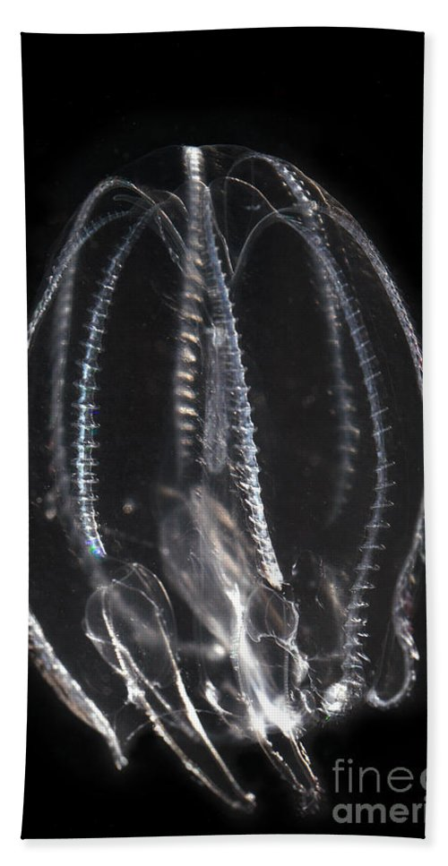 Northern Comb Jelly Hand Towel featuring the photograph Northern Comb Jelly by Ted Kinsman
