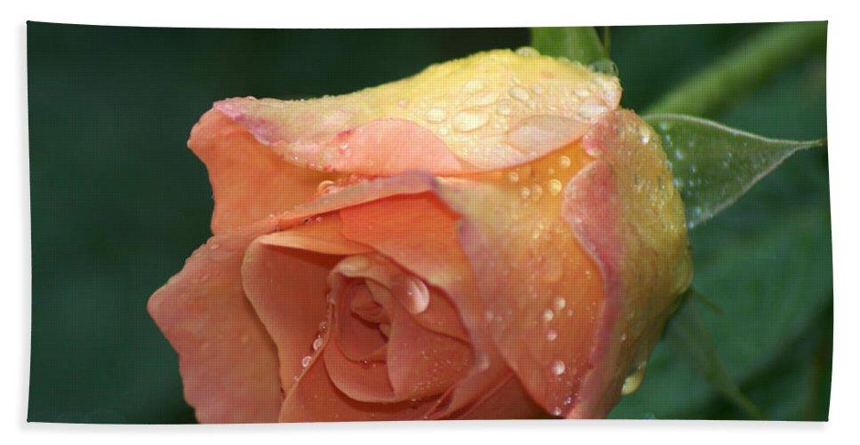 Orange Rose Bath Sheet featuring the photograph Orange Rose by Chris Day