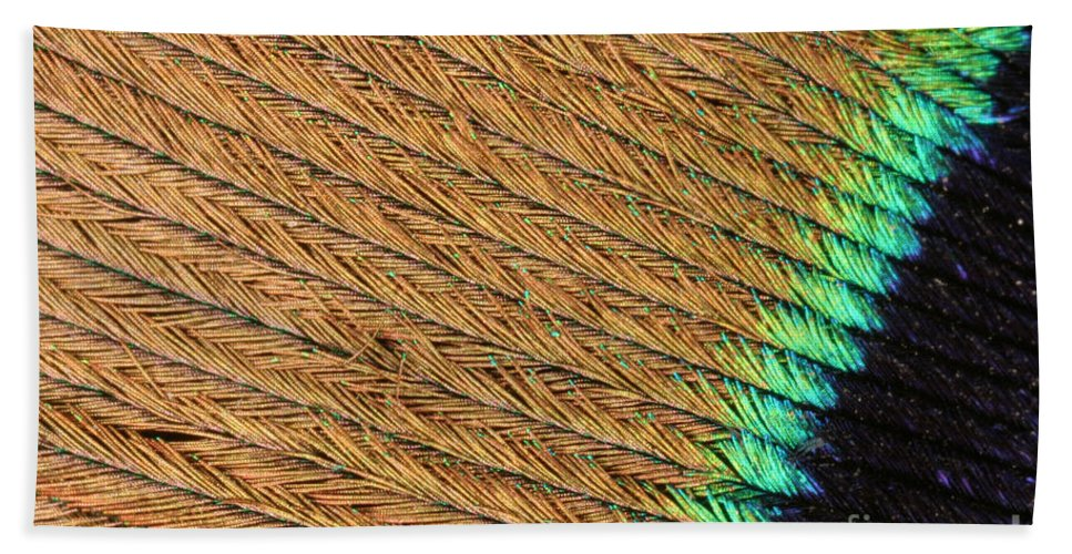 Peacock Feather Hand Towel featuring the photograph Peacock Feather by Ted Kinsman