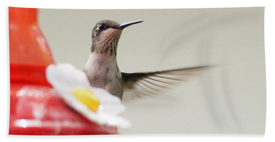 Birds Hand Towel featuring the photograph Peak by Lori Tordsen