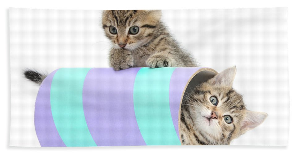 Nature Hand Towel featuring the photograph Playful Kittens by Mark Taylor