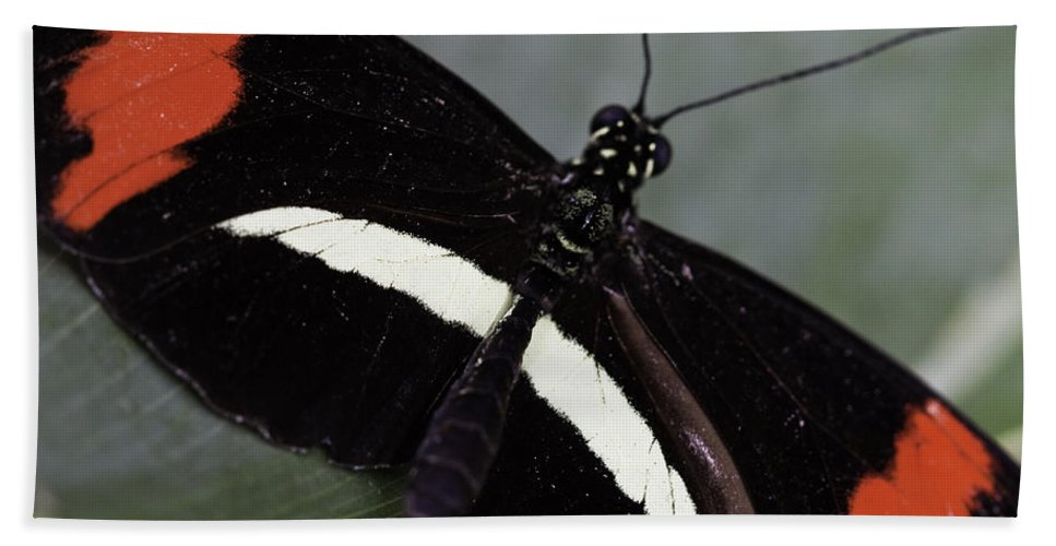 Postman Hand Towel featuring the photograph Postman Butterfly by Perla Copernik