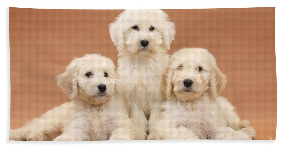 Animal Hand Towel featuring the photograph Puppies by Mark Taylor