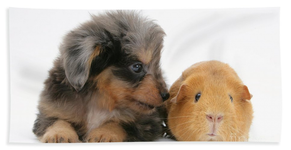 Animal Hand Towel featuring the photograph Puppy And Guinea Pig by Mark Taylor