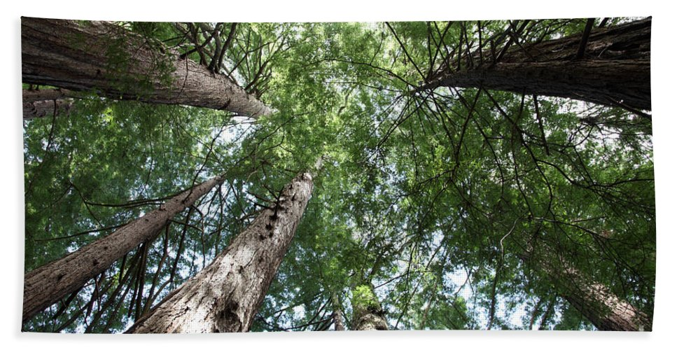 Coast Redwood Hand Towel featuring the photograph Redwoods Sequoia Sempervirens by Ted Kinsman