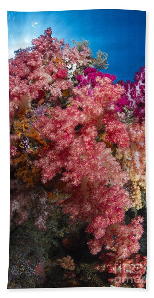 Raja Ampat Hand Towel featuring the photograph Soft Coral In Raja Ampat, Indonesia by Todd Winner