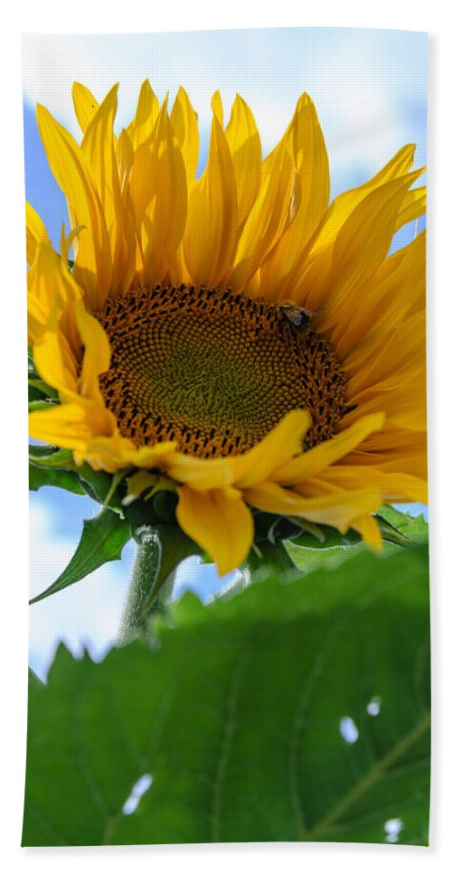 Orange Bath Sheet featuring the photograph Sunflower by Michael Goyberg