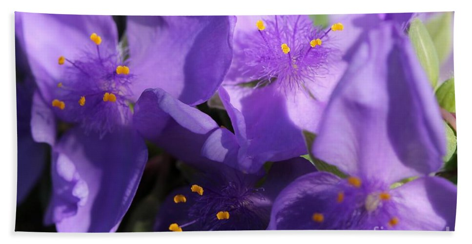 Tradescantia Hand Towel featuring the photograph Tradescantia Named Andersonia Mauve by J McCombie