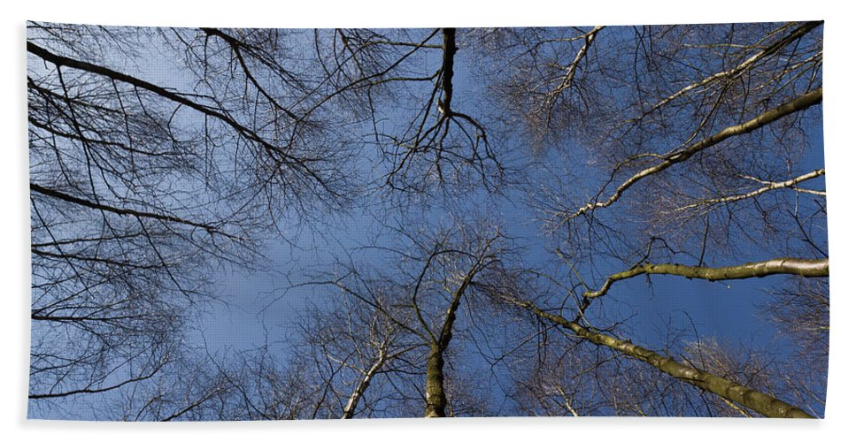 Tree Hand Towel featuring the photograph Trees In Epping Forest by David Pyatt