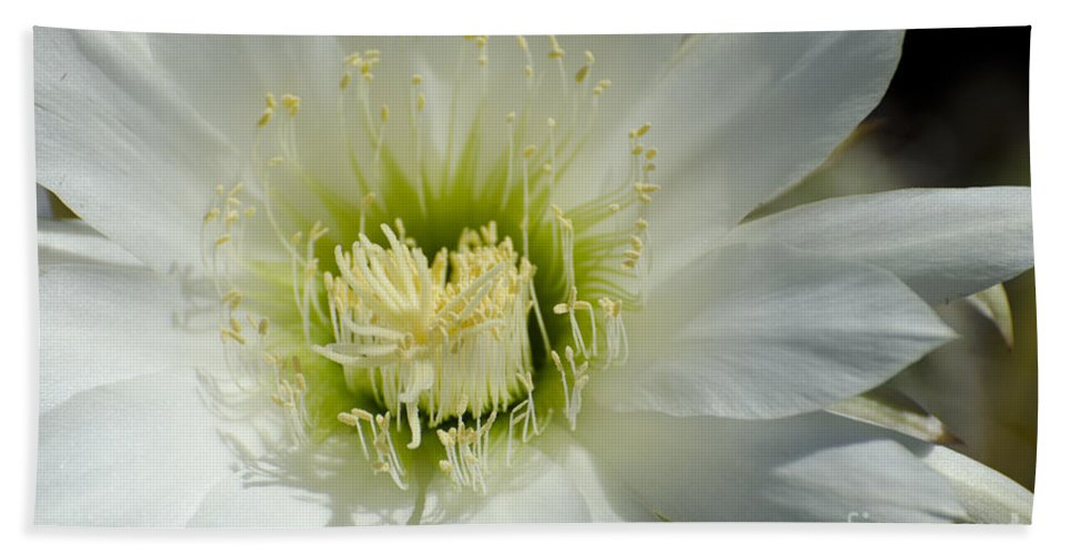 Cactus Hand Towel featuring the photograph White Cactus Flower by Jim And Emily Bush
