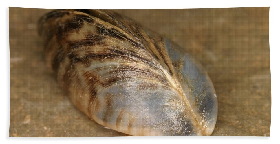 Animal Hand Towel featuring the photograph Zebra Mussel by Ted Kinsman