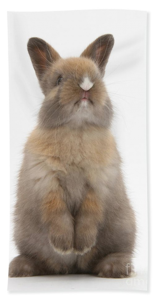Animal Hand Towel featuring the Baby Rabbit by Mark Taylor