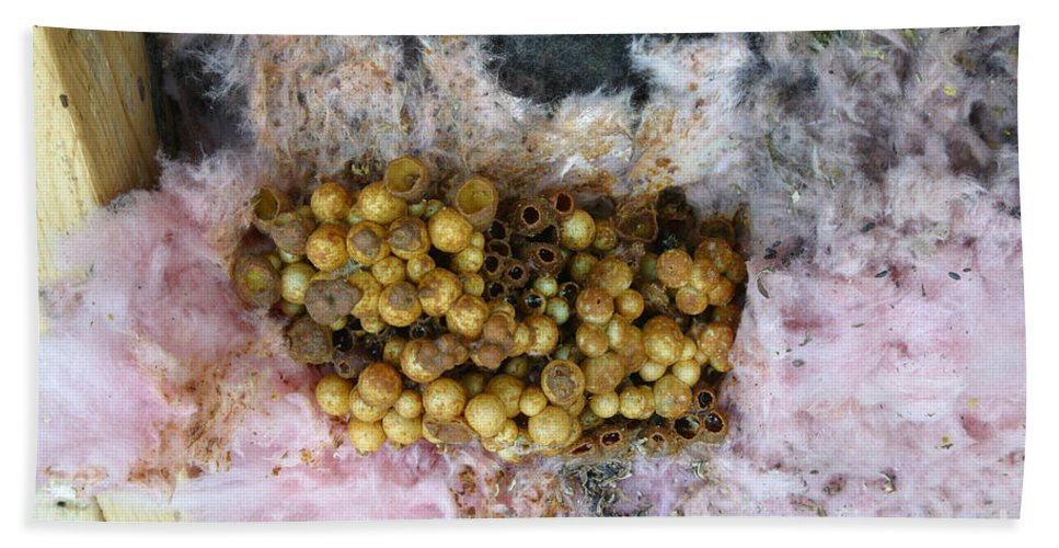 Animal Hand Towel featuring the photograph Bumblebee Nest by Ted Kinsman