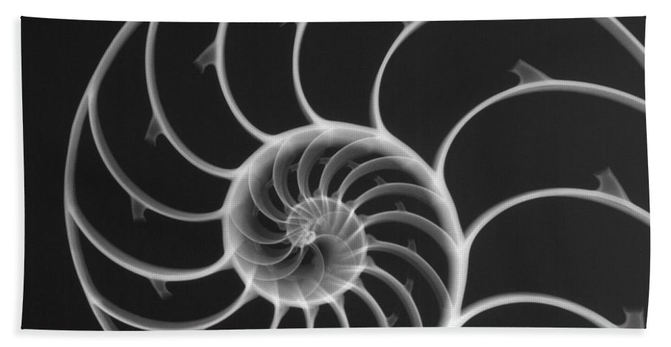 X-ray Hand Towel featuring the photograph Chambered Nautilus by Ted Kinsman