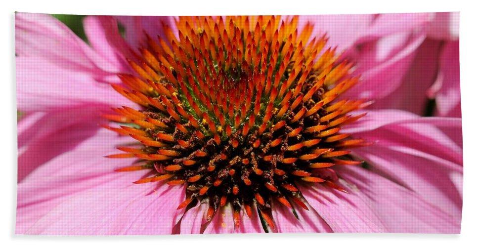 Echinacea Purpurea Hand Towel featuring the photograph Echinacea Purpurea Or Purple Coneflower by J McCombie