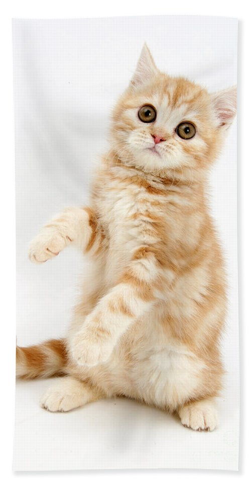 Animal Hand Towel featuring the photograph Ginger Kitten by Mark Taylor