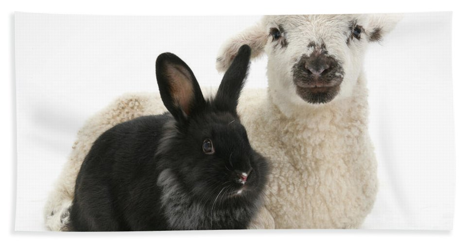Animal Hand Towel featuring the photograph Lamb And Rabbit by Mark Taylor