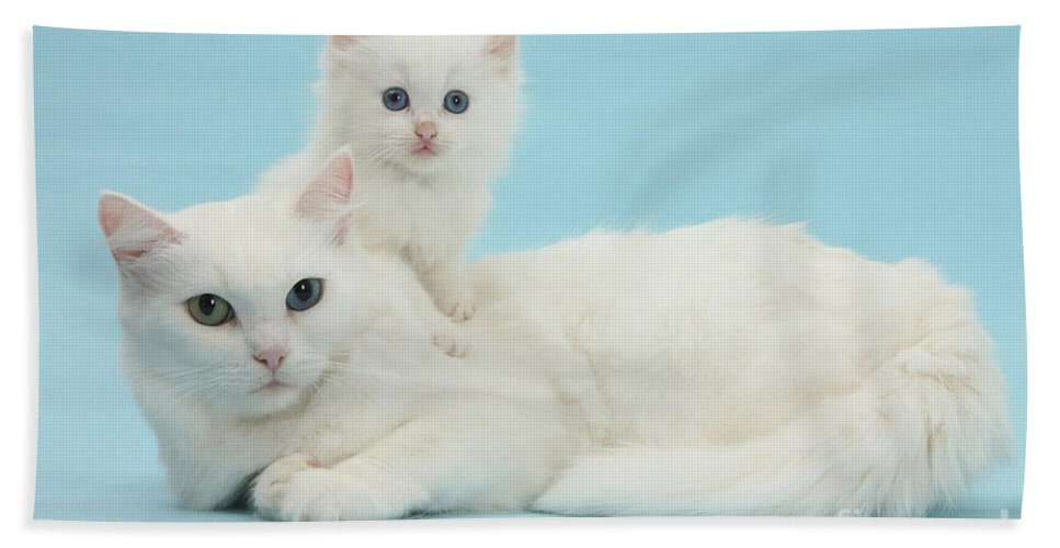 Animal Hand Towel featuring the photograph Mother Cat With Kitten by Mark Taylor