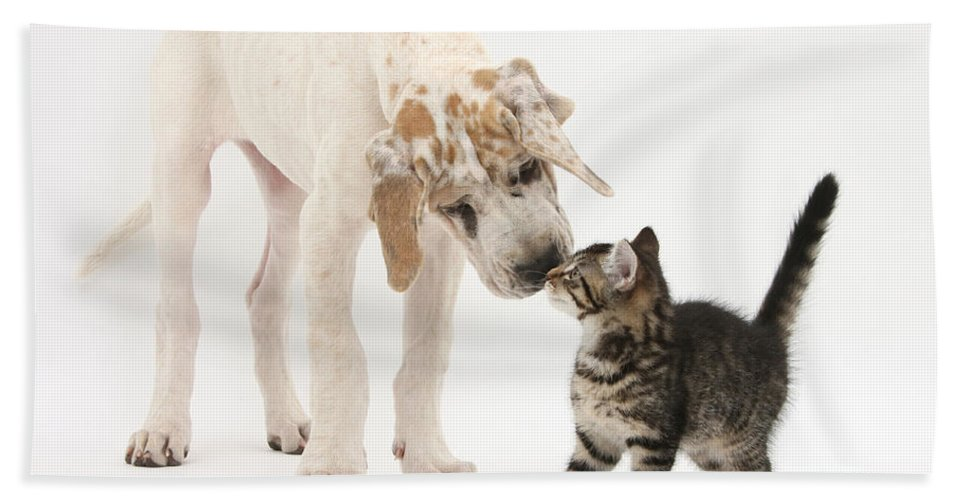 Animal Hand Towel featuring the photograph Tabby Kitten & Great Dane Pup by Mark Taylor