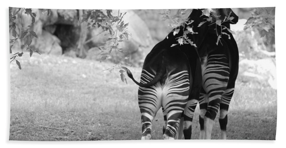 Animal Bath Sheet featuring the photograph Two Stripes by Rob Hans
