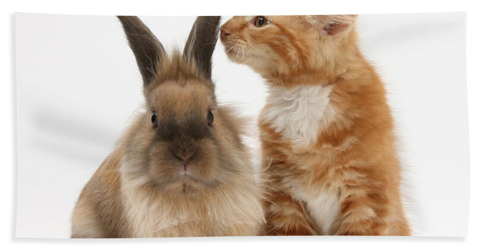 Animal Hand Towel featuring the photograph Kitten And Rabbit by Mark Taylor