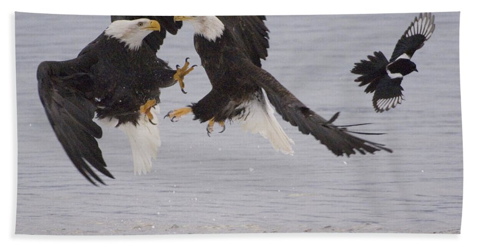 Mp Hand Towel featuring the photograph Bald Eagle Haliaeetus Leucocephalus by Michael Quinton