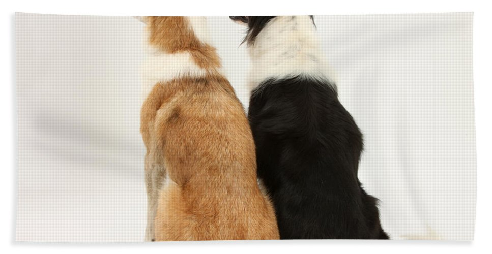 Animal Hand Towel featuring the photograph Border Collies by Mark Taylor