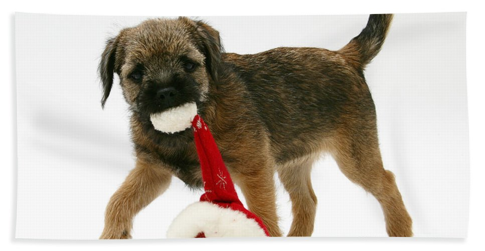 Animal Hand Towel featuring the photograph Border Terrier Puppy by Mark Taylor